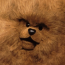 avatar_bungle